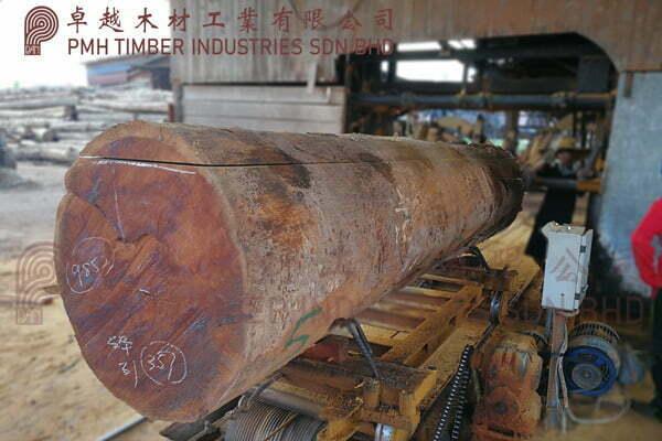Chengal Log Cutting